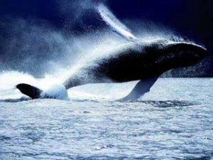 [baleia.jpg]